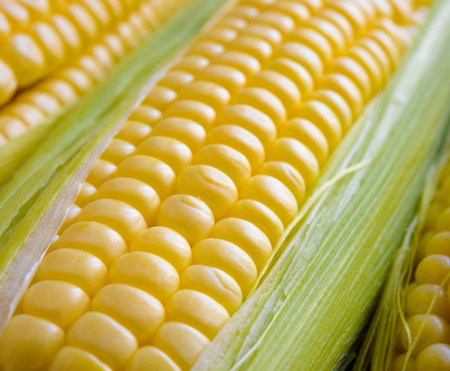 sweetcorn: Fresh Sweet Ripe Corn Cobs with Green Leaves. Soft focus. Stock Photo