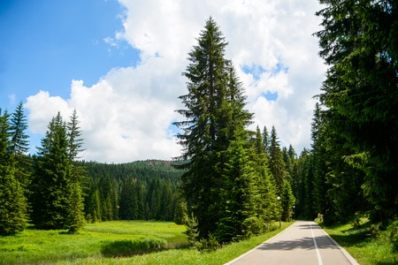 abeto: Free Road among Beautiful Fir Forest in the National Park Durmitor, Montenegro