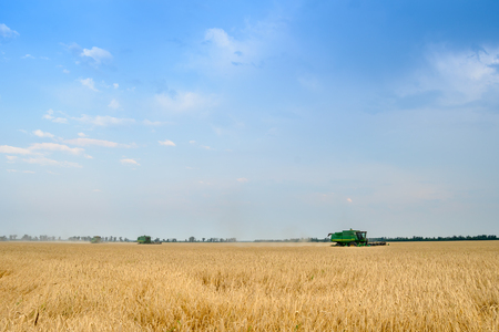 harvesters: Four Combine Harvesters Harvesting Wheat in the Field under Blue Sky Stock Photo