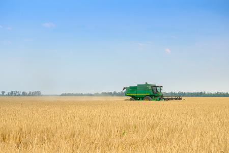 maquinaria: Cosechadoras de cosecha de trigo en el campo.