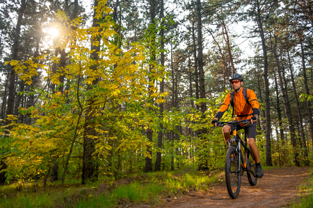 Cyclist in Orange Riding the Mountain Bike on the Trail in the Beautiful Pine Forest Lit by Bright Sun.