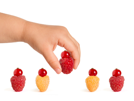 Little Baby Hand Taking Tasty Berries from the Row of Ripe Colorful Raspberries with Red Currants on the Top. Isolated on the White Background. Cute Summer Berry Cakes.