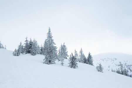 Beautiful Winter Mountain Landscape with Snow Covered Fir Trees in the Morning Fog.