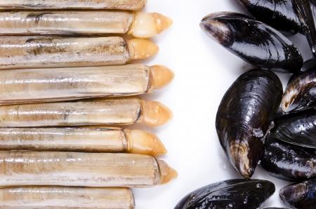mollusk: Mollusk texture