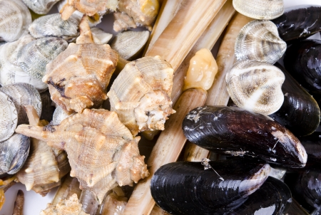 marisco: Mollusk texture in closed frame Stock Photo