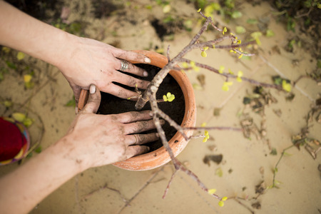 transplanting: preparation and transplanting plants with bare hands in a pot Stock Photo