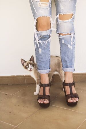 Anonymous image of woman with torn jeans on a summer day sexy, and cat