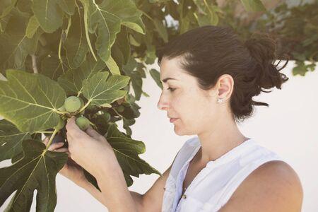 Mitad mujer adulta recogiendo higos en el árbol seleccionando madura de inmaduros en imagen de verano Foto de archivo