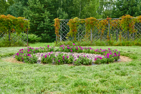 A garden with a fence on a cloudy day in summer