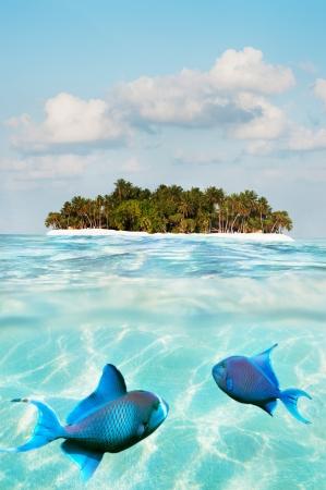 Half underwater shot of fish on sand sea floor and palm island