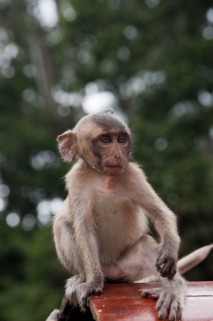 Beautiful portrait of young monkey Stock Photo - 23687497