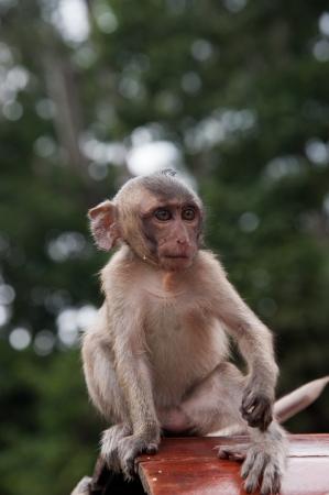 Beautiful portrait of young monkey Stock Photo - 23687497