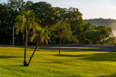 Palms on green grass field at sunset photo