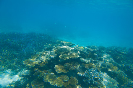 Coral reef with great hard corals at the bottom of caribbean ocean photo