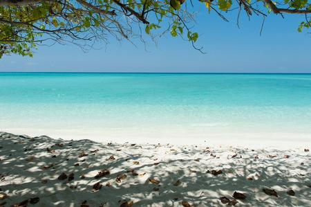 arena blanca: Hermosa escena en el Oc�ano �ndico con el �rbol en la playa y la arena blanca, Islas Maldivas