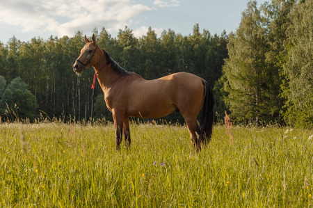 Beautiful brown horse stay in grass field