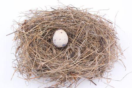 egg on a nest photo