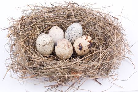 eggs on a nest photo