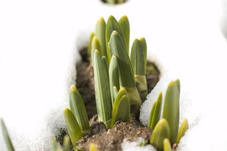 spring shoots  Stock Photo - 2767385