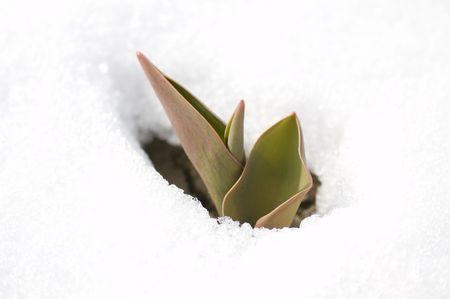graft: spring sets Stock Photo