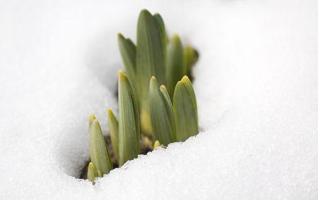 spring sets photo