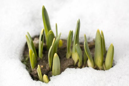 spring shoots  Stock Photo - 2767386