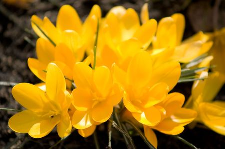 graft: young spring flowers