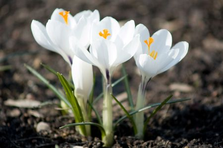 young spring flowers photo