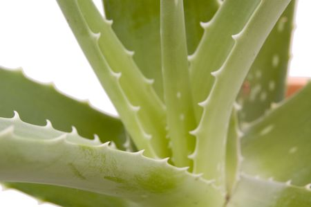 damping: herb aloe Stock Photo