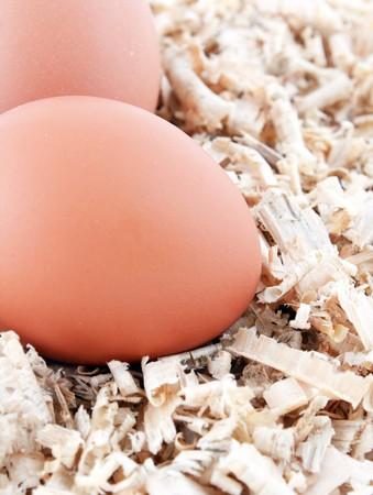 origen animal: huevos de aserrín Foto de archivo