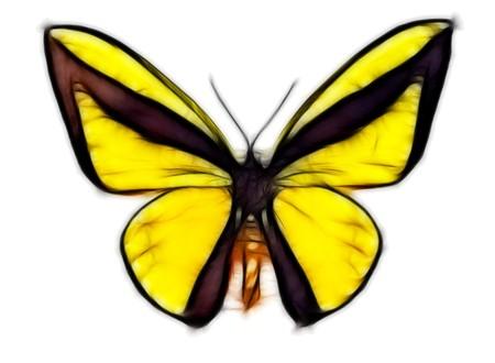 flier: yellow butterfly Stock Photo