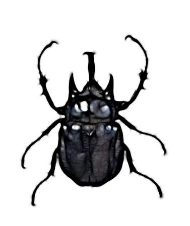 exotic beetle photo