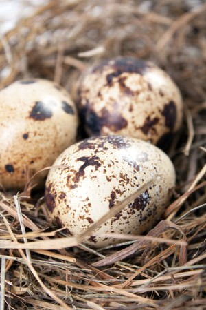 herbage: motley eggs at nest Stock Photo