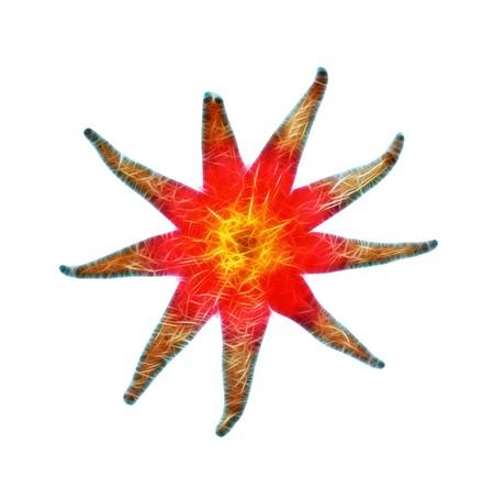mollusca: Sea star isolated on white