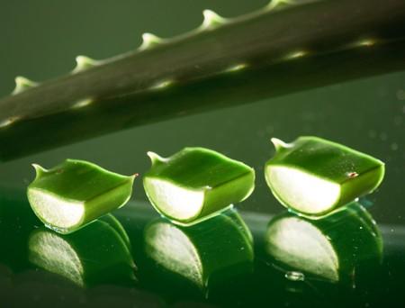 Green aloe vera leaf Stock Photo - 4561734