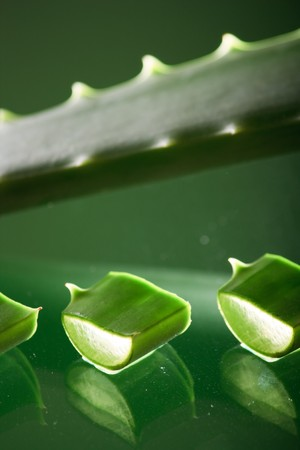 Green aloe vera leaf Stock Photo - 4561880