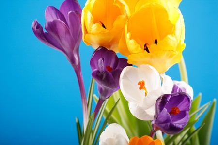 festal: Rich spring flowers background Stock Photo