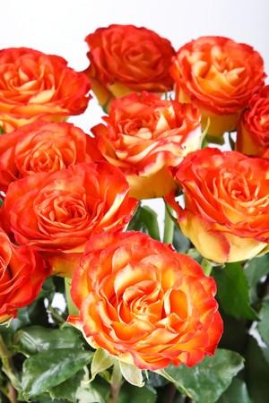 rosas naranjas: rosas de color naranja