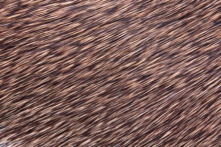 hair background photo