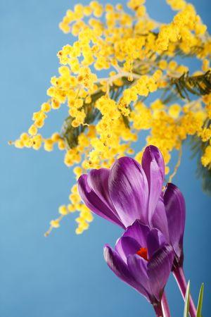 Spring holiday crocus flowers Stock Photo - 4580663