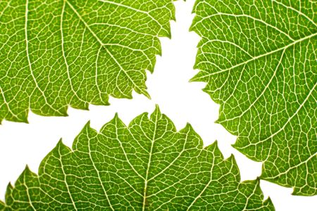 neat: green leaves