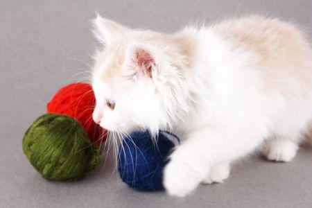 funny white kitten photo