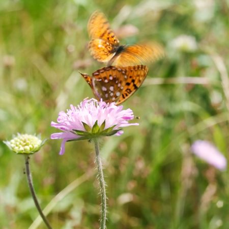 butterfly flower photo