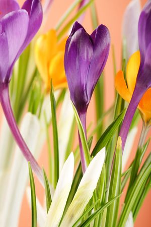 neatness: Rich spring flowers