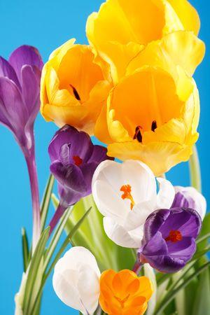 neatness: spring flowers