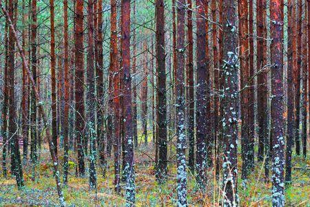 Autumn forest Stock Photo - 5967510