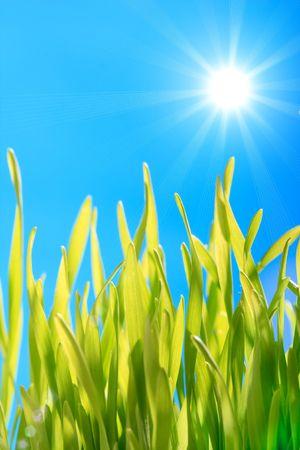green grass and sun photo