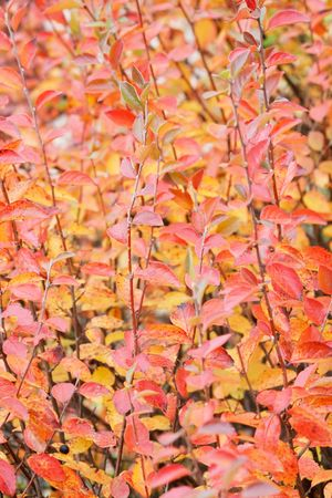fall background Stock Photo - 5967445