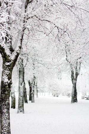 styczeń: Park zimowe w śniegu