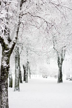 enero: Parque de invierno en la nieve